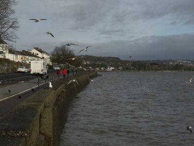 sea gulls flying along waterfront in swansea