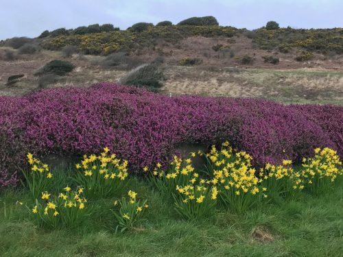 flowers along Wales coast path mumbles south wales